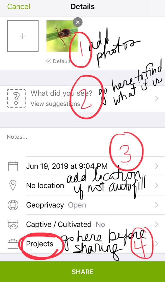 iNaturalist with steps outlined